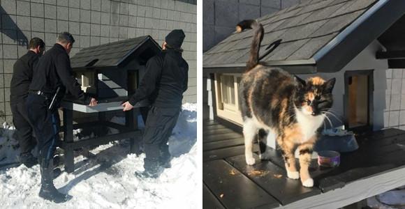 アメリカの特殊部隊SWATに愛されすぎた元野良猫、ついに手作りの一軒家が贈られる。それにはこんな事情があった。