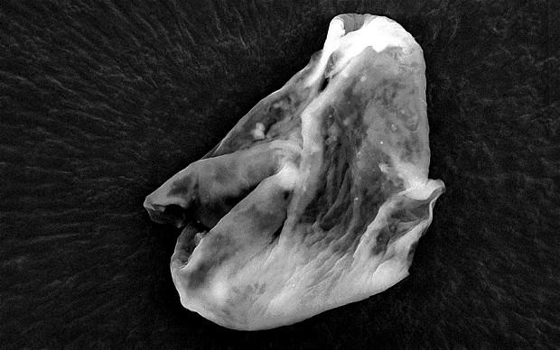 地球外生命体が、地球の成層圏で発見されただと?(英研究)