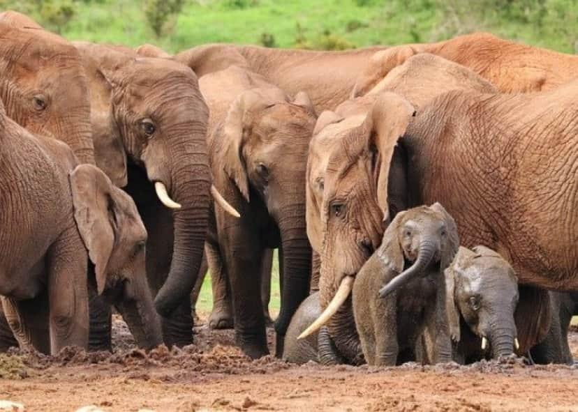 elephant-4736008_640_e