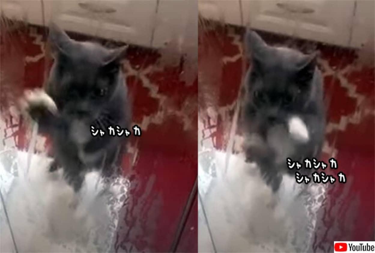 お風呂の中の飼い主が心配でシャカシャカが止まらない猫