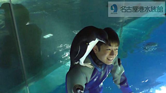 「お兄さん、お兄さん、のっけてね」名古屋港水族館には掃除中に肩に乗ってくるペンギンがいるらしい