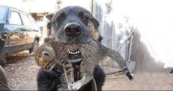 火事で燃える家の中に飛び込み子猫を救出した犬(ウクライナ)