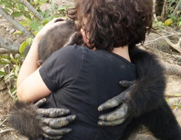 それでも人のぬくもりが欲しいんだ。生体実験の末捨てられ、ついに一人ぼっちとなったチンパンジー、久々の訪問者を思わずギュっと抱きしめる
