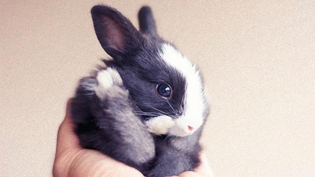 ウサギの赤ちゃんが生まれた!赤ちゃんウサギの生後30日間を撮影した成長記録を見てみよう