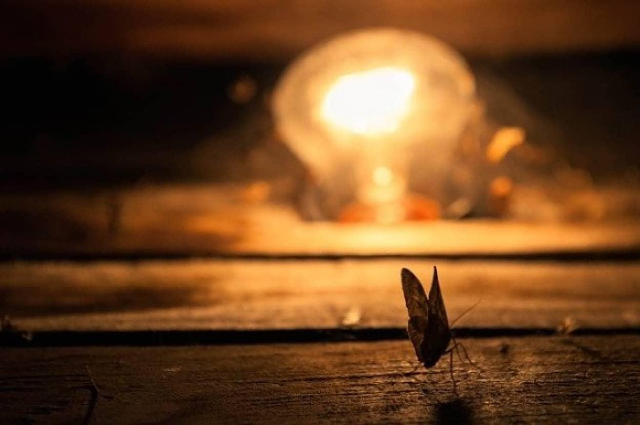 昆虫保護の為夜間照明を暗くすることを検討するドイツ