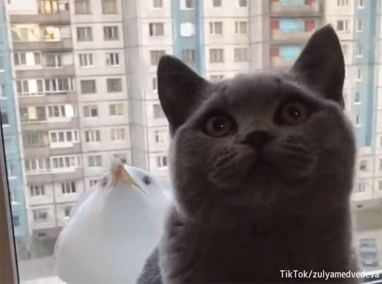 猫とカモメのシンクロ芸