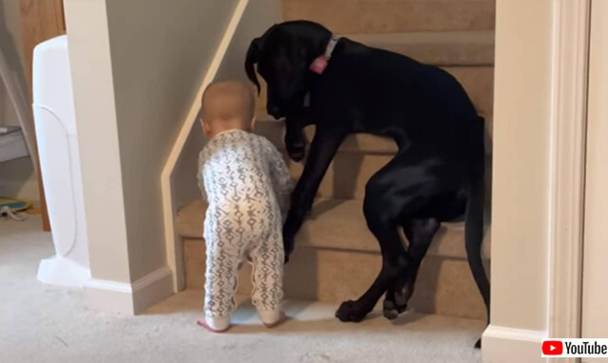 赤ちゃんを危険から守ろうとする犬