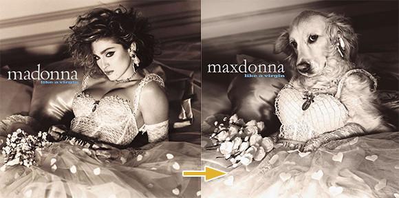 マドンナを完全コピー。愛犬を世界の歌姫マドンナに見立てるプロジェクト「マックスドンナ」