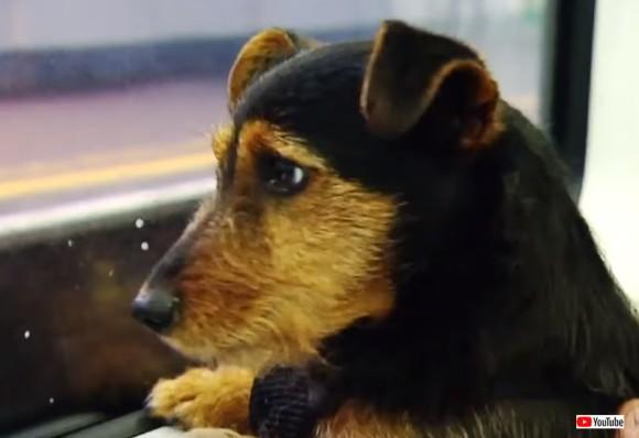 混雑した通勤電車内に迷い込み行方不明となった犬、SNS大捜査網により無事飼い主と再会(アイルランド)