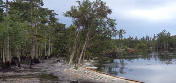 水中に開いた陥没穴によって木々が数秒で飲み込まれていく驚愕の映像(米ルイジアナ州)
