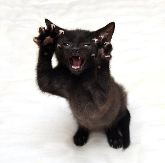 うちの猫の殺人ミトンをお見舞いするぜ?爪を全開にした猫たちの写真