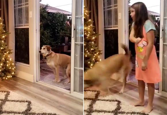 心の綺麗な犬にしか見えない魔法のドア?そしてまた、心の綺麗な少女のみ開けることができるっていう。