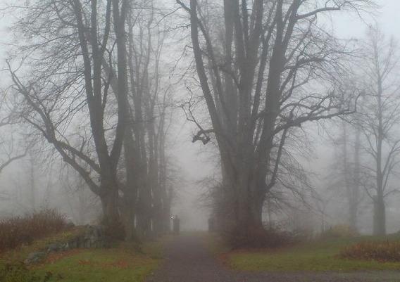 fog_31