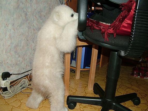 polarbearbabysaved-31