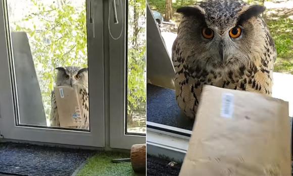 お手紙来てたよ!手紙を運んできてくれるハリーポッターのヘドウィグみたいなフクロウは実在した!(ロシア)