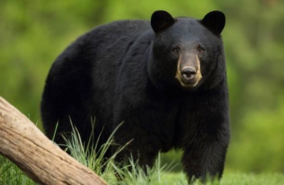 恋人を探して旅する熊