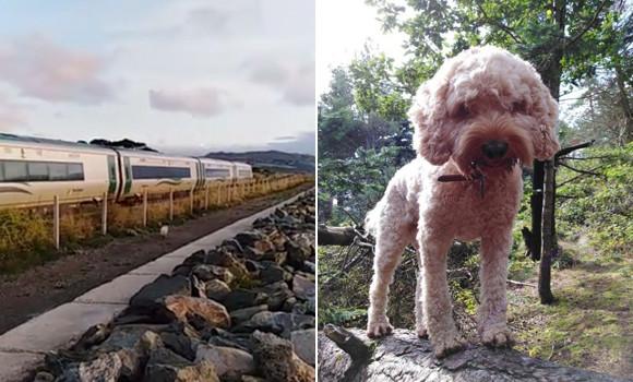 列車なんかに負けないワン!朝の散歩中に出会う列車とかけっこ競争する犬(アイルランド)