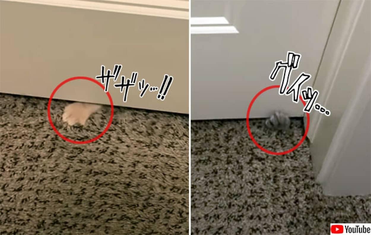 ドアに忍び寄る小さな肉球、その正体は子猫の大群!