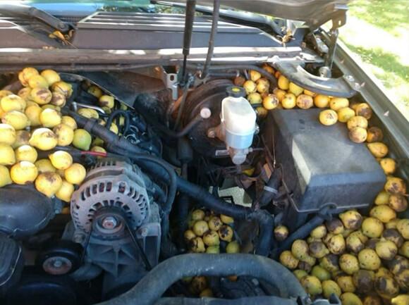 リスに備蓄されすぎた車。たった数日で大きなバケツ7杯分を大量投入された件