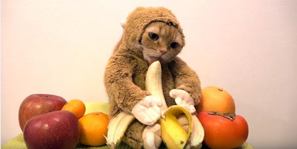 12年待っても出番ないし・・・干支に入れなかった猫、サルに偽装してバナナを食べ始める