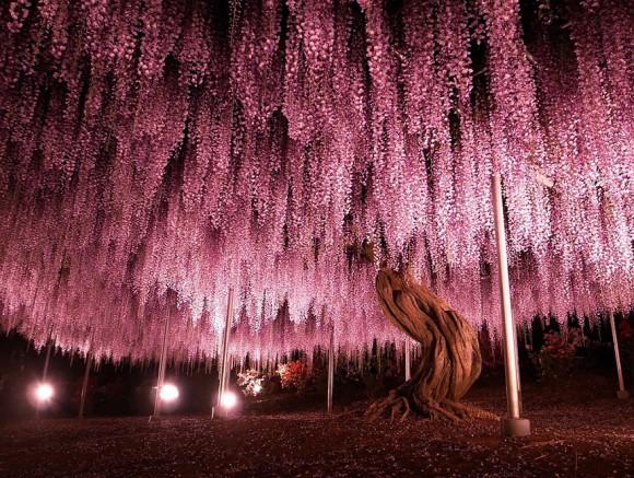 神々しいほどの美しさ、世界の偉大にて壮大なる16の樹木