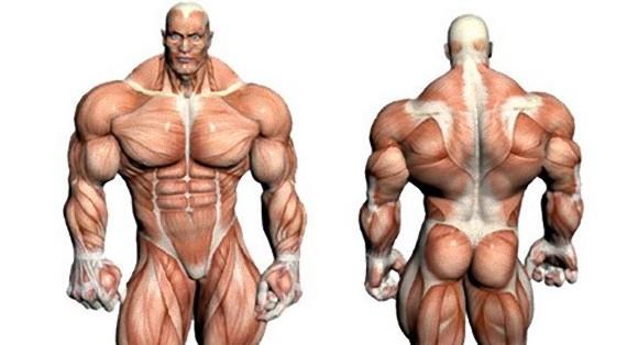 常人の1000倍。超人の力を得られる「ロボティック・マイクロ筋肉」が開発される(米研究)