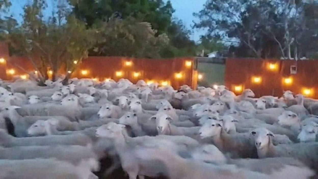200匹もの羊の群れが一斉に民家の庭になだれ込む襲来事案