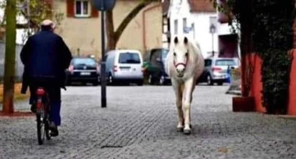 """ドイツで有名な1頭だけで散歩する白馬"""""""
