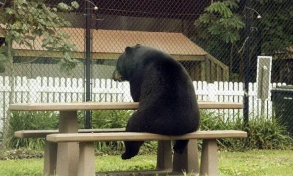 うそマジほんとに?街中いたるところに。あたりまえのようにクマがいるロシアの日常(41枚)