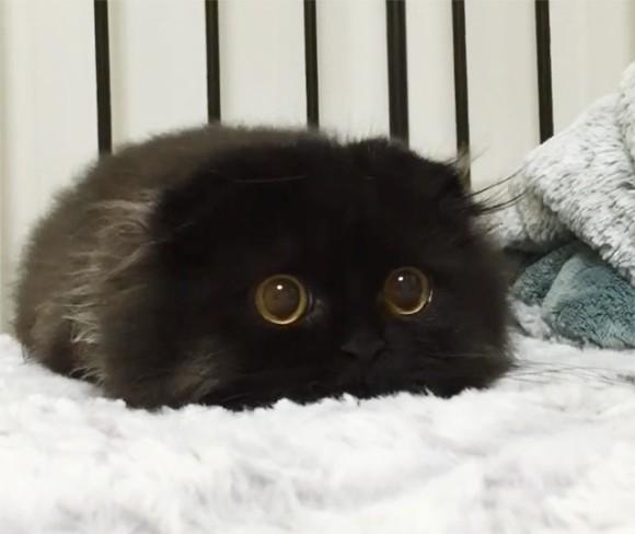 実在していた!?まっくろくろすけの生存が確認される。わりと猫だけど。