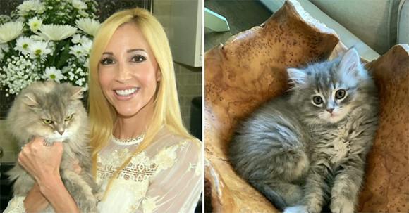 最愛の猫を失った飼い主、高額を支払いクローン猫を蘇らせる。性格も寝る場所も一緒だったと大喜び(アメリカ)