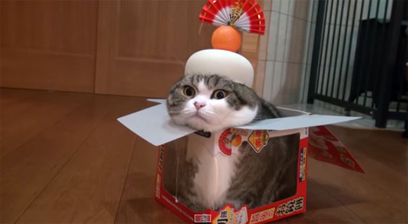 見るだけでご利益ありそうな猫動画「鏡餅猫」