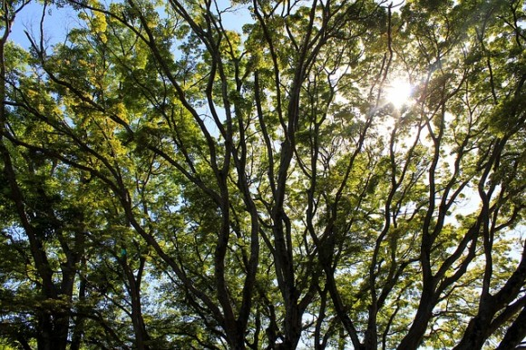 木は言葉を話し、私たちはそれを学習することができる(生物学者)