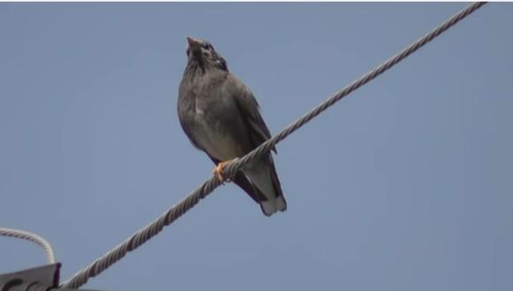 bird_e0