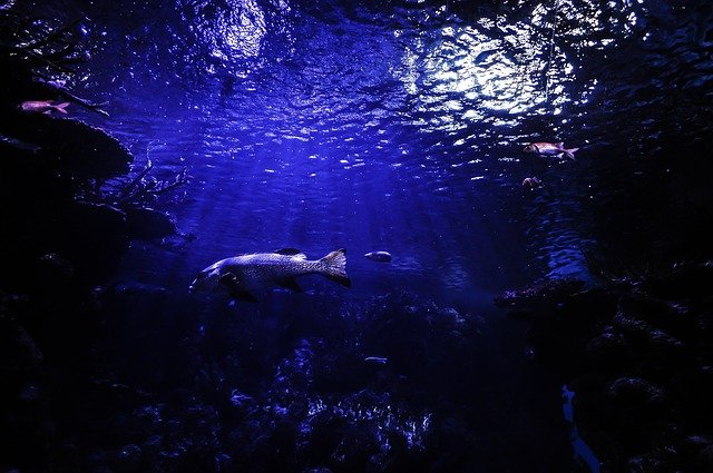 2020年深海での7つの発見