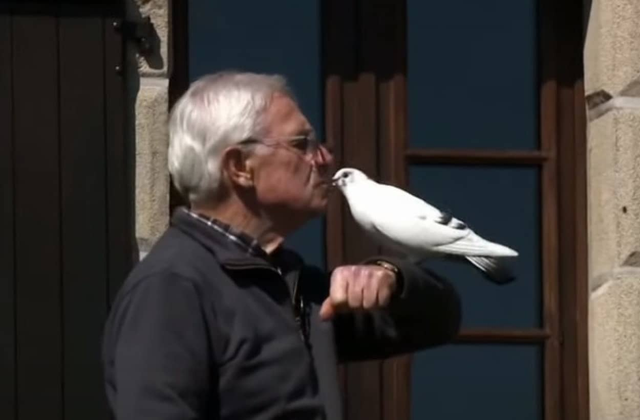 おじいさんと鳩の友情物語