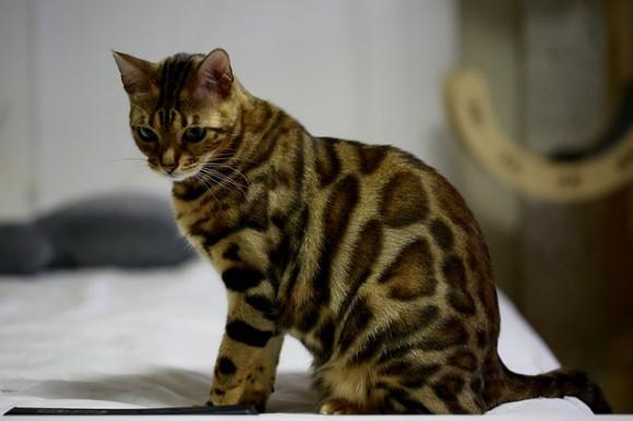 cat-4111686_640_e