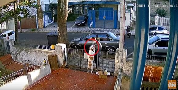 犬の服を無理やり脱がせて持ち去った人、それを知り犬の服を買い、着せに来る人