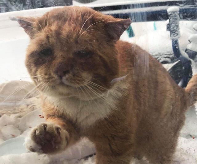 寒いので中にいれてくれませんか?人間に助けを求めに来た猫の保護物語(カナダ)