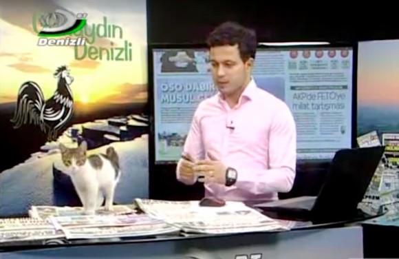 放送事故。どこからともなく現れた子猫、スタジオのテーブルにあったパソコンのキーボードで暖をとる(トルコ)