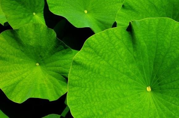 giant-leaf-1556769_640_e