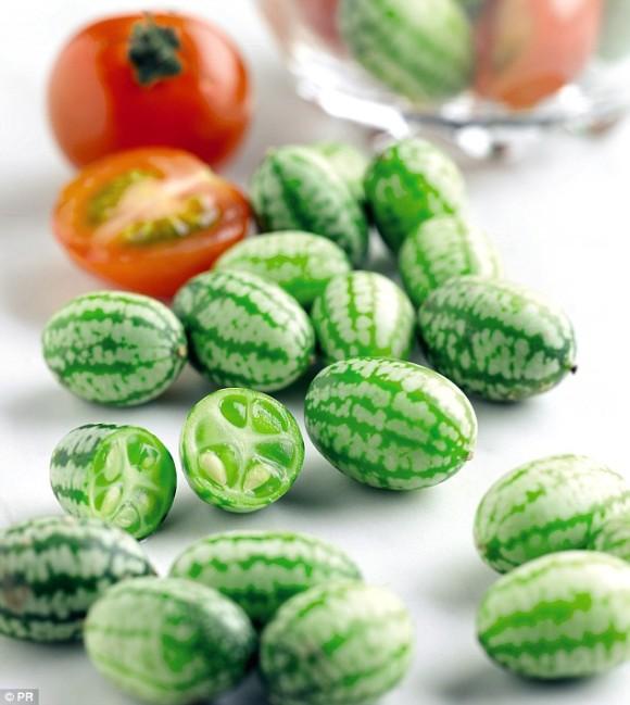 きゅうりとライムの味がする。栽培も簡単でそのまま食べられる欧米で人気急上昇の「きゅうりメロン」、日本でも種子販売