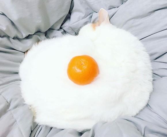猫にミカンを置いたらあまりにも目玉焼きっぽかったのでコラ職人頑張る