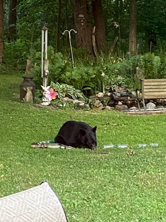 bear1_e