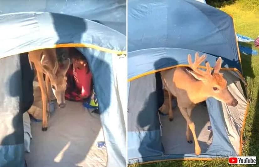 tent3_640