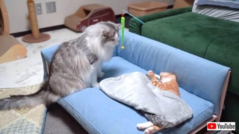 kittenissick3_640