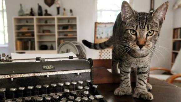 だが安心してほしい。ハリケーン「イルマ」が襲来するもヘミングウェイの家で暮らす54匹の猫たちは全員無事だった。
