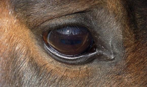 horse-1812325_640_e