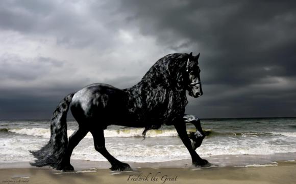 世界一イケメンと称えられる馬。フリージアン・ホースの最高峰、ザ・グレート・フレデリック(アメリカ)