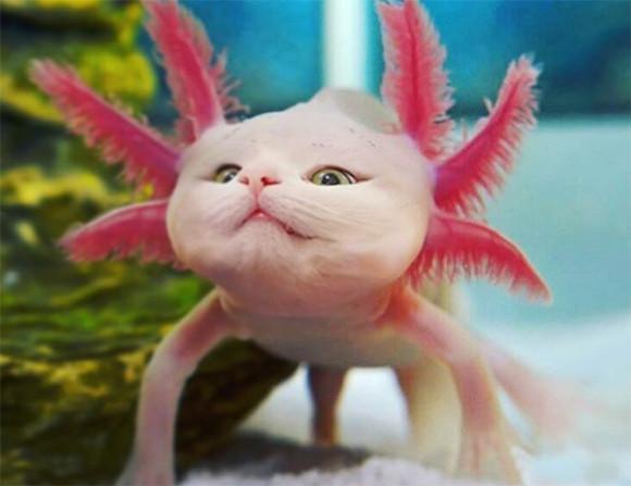 猫はどんな動物にもよくなじむ。2匹の飼い猫を他の動物と合体させてキメラ化させた作品
